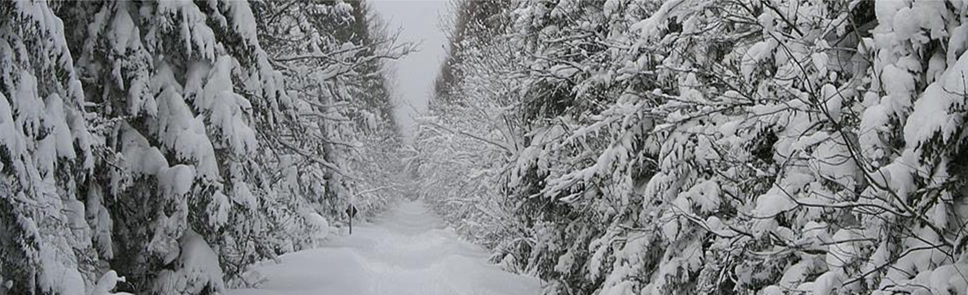 Snowmobile trail in winter